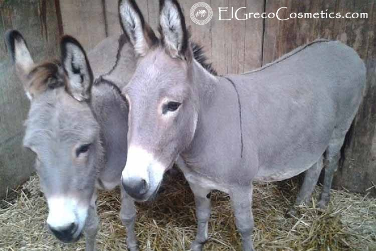 new donkey milk soap products from el greco handmade natural cosmetics